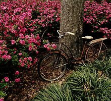 Amongst the Azaleas by Dawn di Donato