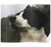 A Dog. Poster