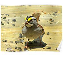White-throated Sparrow ( Zonotrichia albicollis) Poster