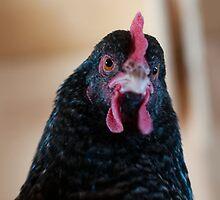 Chicken-1 by Winnie Abramson
