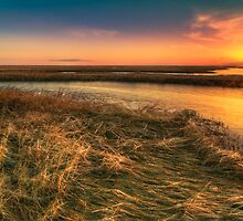 Tidal  Sedge by clemcoz