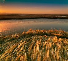 Tidal  Sedge  Wetlands by clemcoz