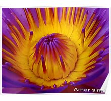 Hot center of waterlily Poster