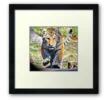 Charging Tiger Framed Print