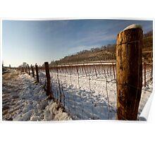 Snow on vineyard Poster