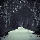 The Long Snowy Path  by MDR-Design