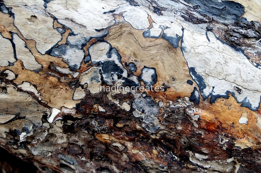 Bark Cartography by nadinecreates