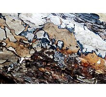 Bark Cartography Photographic Print