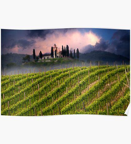 Vineyard hill Poster