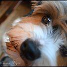 Puppy dog Eyes by BrightBrownEyes
