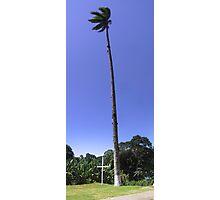 Very tall palm tree Photographic Print