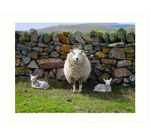 Mum & Bairns, Spiggie, Shetland Art Print
