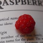 Rubus idaeus #2 by Tom McDonnell