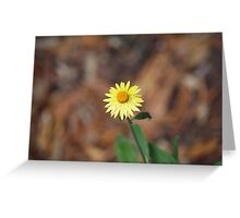 Only one flower  Greeting Card