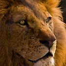 Proud Lion by SteveBB