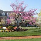 Courtyard, Virginia Crossings by AJ Belongia