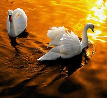 Golden Swanlight by SteveBB