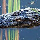 Al-e-gator by RebeccaBlackman