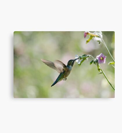 Flying Angel  Canvas Print