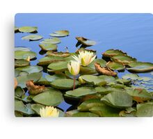 Lily pads with flower Canvas Print