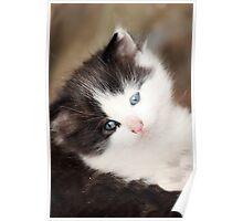 Fluffy Feline Poster