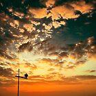 Transient Twilight by Zohar Lindenbaum