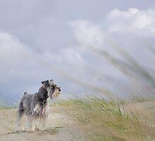 My schnauzer Fritzel  by pdsfotoart