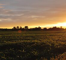 Sunset Rays by Steve  Savoie