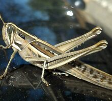 Carpark Grasshopper - Science Park, South Australia by Dan & Emma Monceaux