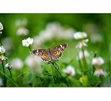 Northern Crescent Butterfly Photographic Print