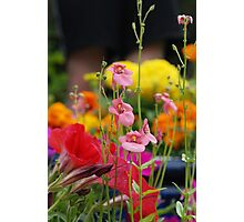 Colourful Garden Photographic Print