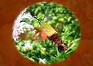 Digital Hummingbird Clear Wing Hawk Moth by MotherNature