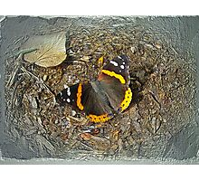 Digital Butterfly - Red Admiral Photographic Print