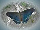 Digital Butterfly - Red Spotted Purple by MotherNature