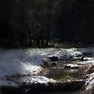 snowy Oregon forest, fox creek 11 by Dawna Morton