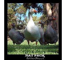 Rat Pack Photographic Print