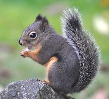 Snack Time (Douglas Squirrel) by Carl Olsen