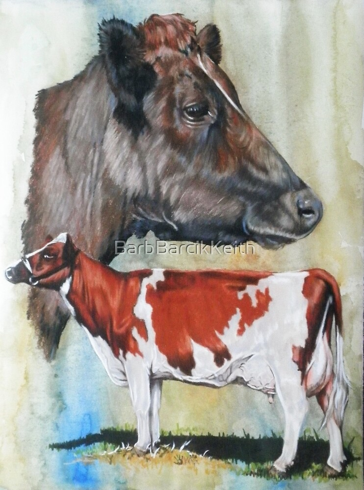 Ayrshire Cattle by BarbBarcikKeith