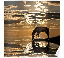 Horse near the river at sunset Poster