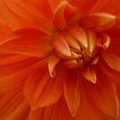 Orange Crush by DEB CAMERON