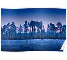 Thursley Common sunset in winter Poster