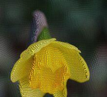 Daffodil by RosiLorz
