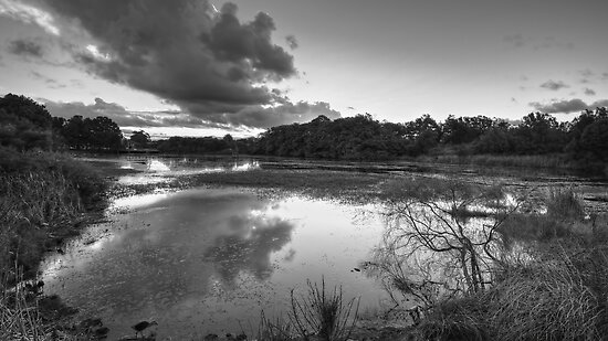 The Mill Pond by Mark  Lucey