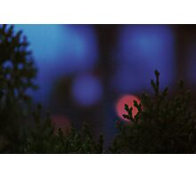 The Rising Christmas Spirit... Photographic Print