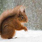 Cheeky Red Squirrel by Nigel Tinlin