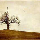 Lone Tree, One Crow by Kelly Letky