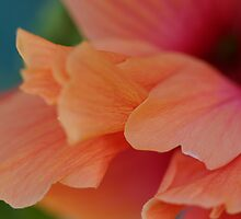 Apricot Delight by Leonie Mac Lean