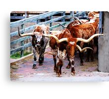 Cattle Drive Thru The Streets Of The Fort Worth Stockyards 2 Canvas Print