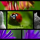 Wildlife Collage by Paul Revans