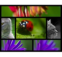 Wildlife Collage Photographic Print